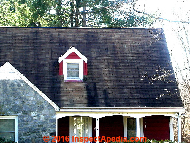 Can black mold cause shingles? 2