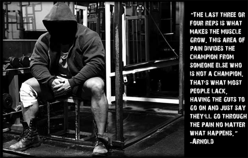 Animal Pak Wallpaper Motivational Quote 4 Inspirational Physiques