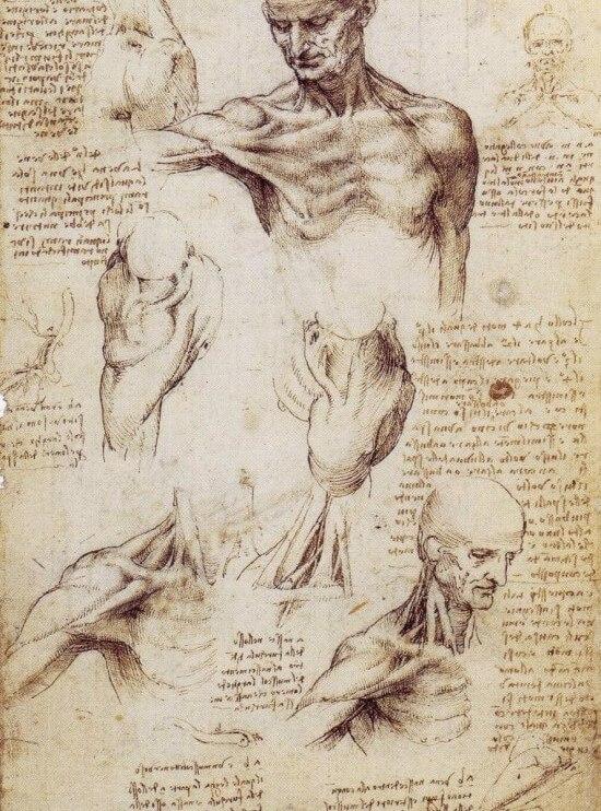 leonardo-da-vinci-sketches-14-550x817