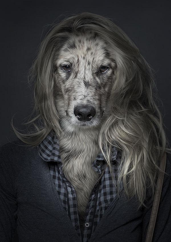 Funny dog Portraits 4