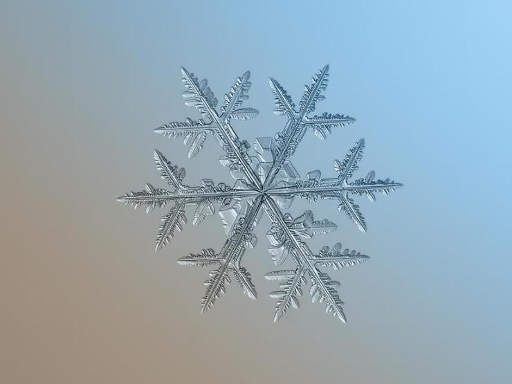 macro snow flake012