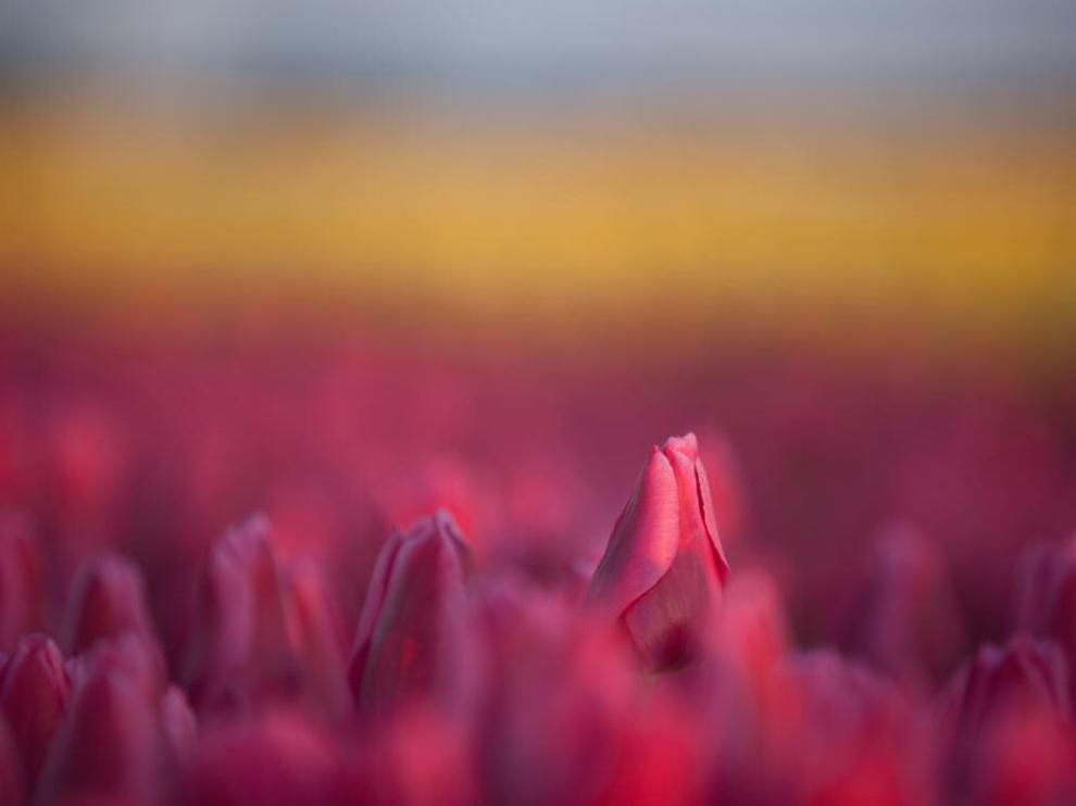 Floral Landscapes2