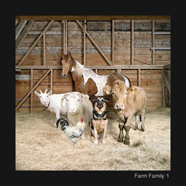 Farm Series2