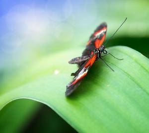 butterflies-on-a-net-1417815-m