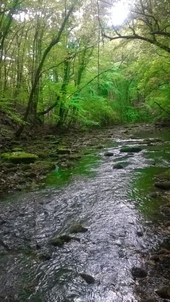 Lush vegetation in Nera's Gorges National Park