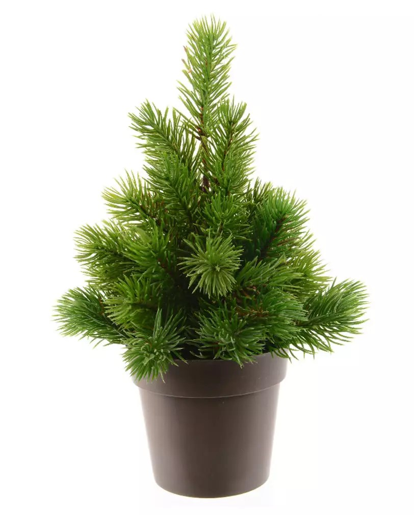 Mini Tannenbaum Fir Tree In Pot