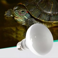 Heat Lamp Night Light Bulb for Pet Snake Lizard Frog ...