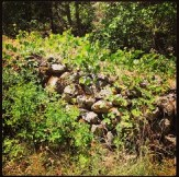 Shrub covered rock wall leading to the South Fork of the American River