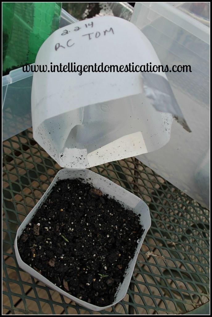 Milk jug Winter seed planter.Intelligentdomestications.com