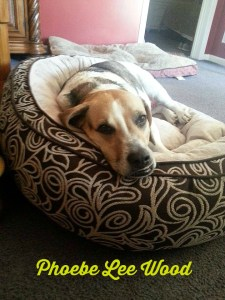 Phoebe in her new bed.intelligentdomestications.com