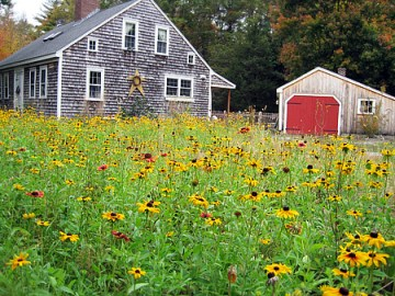 meadow instead of lawn