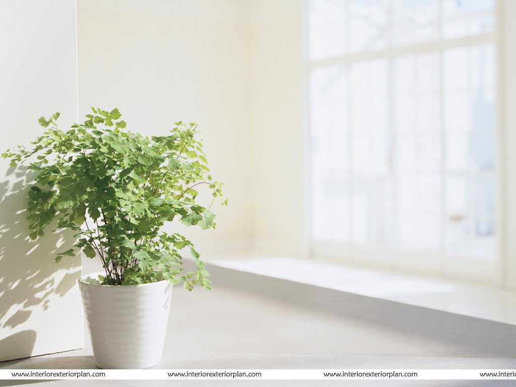 Plant Interior Interior Exterior Plan A Wonderful Plant In A Wonderful Pot