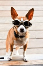 georgie-doggles-2