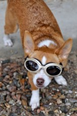 georgie-doggles