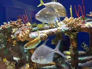 Shipwrecks_Aquarium
