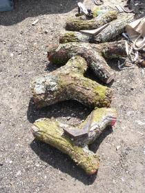 Knee Log Timber