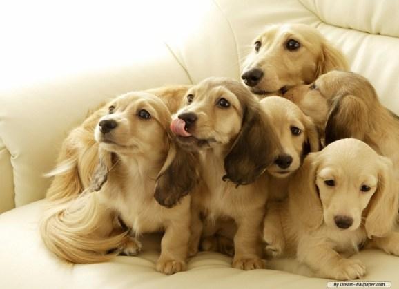 IMDT Rescue Pup!
