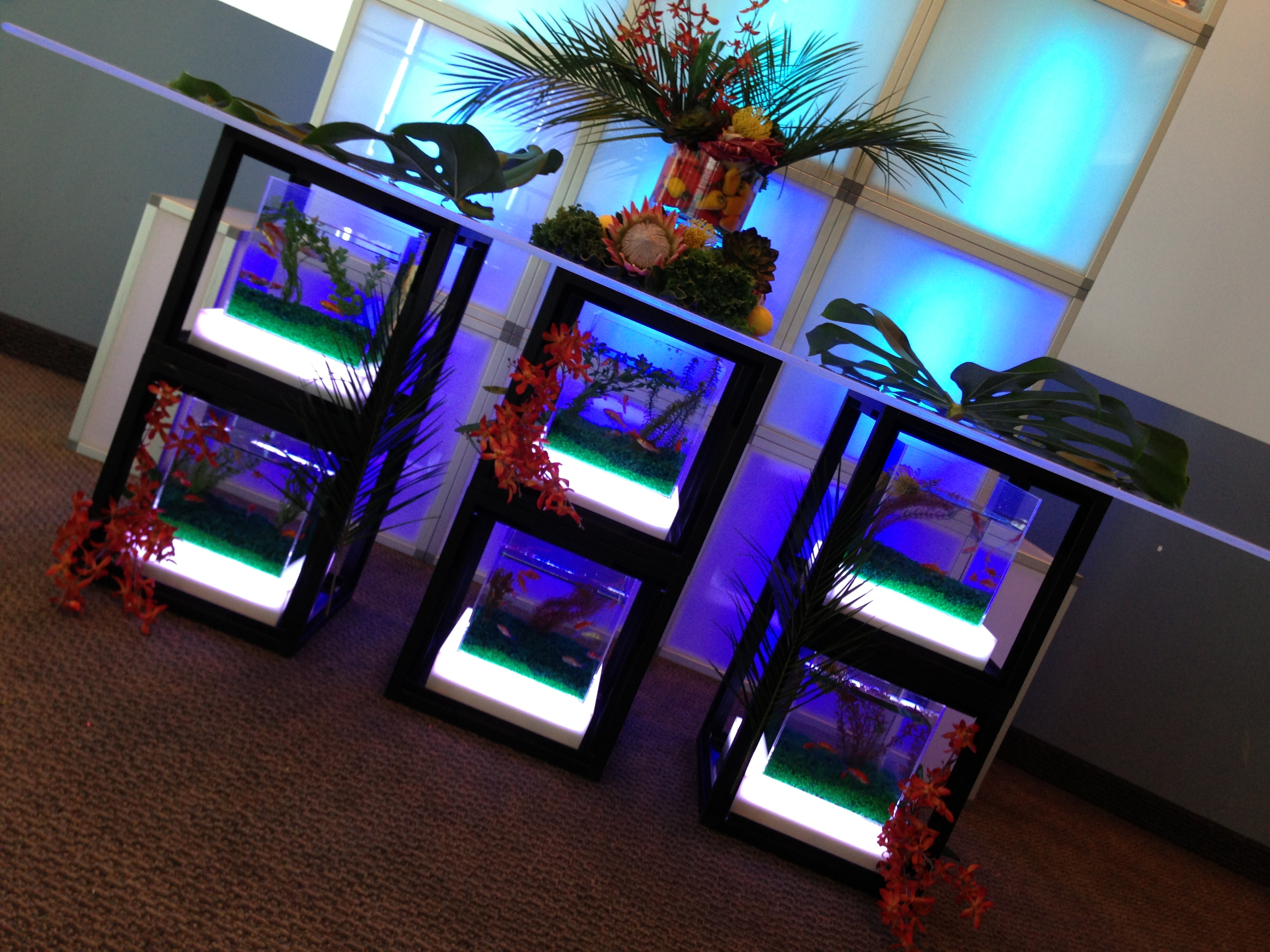 Buffet Led But Acrylic Buffet Table Event Rental