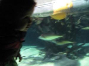 baby at london aquarium