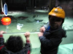 london aquarium sting rays