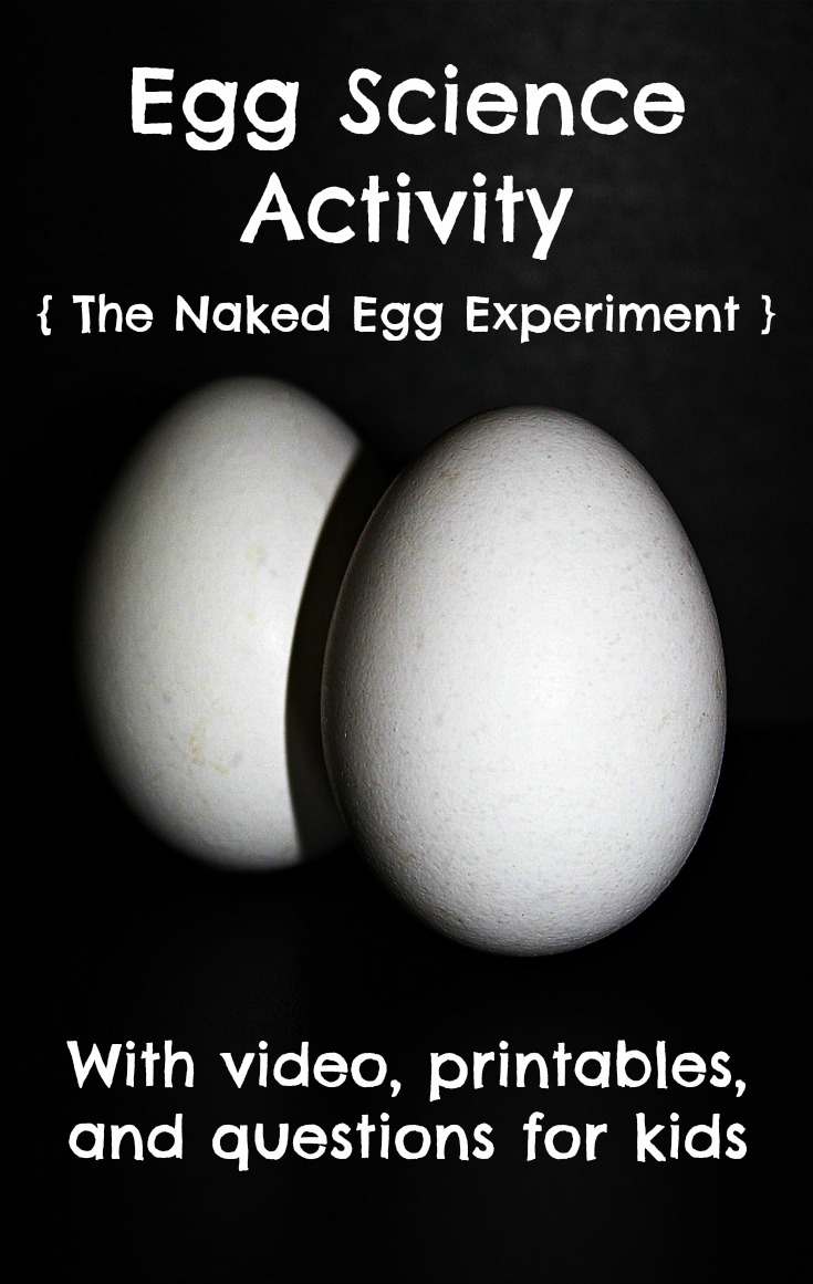 egg science experiment