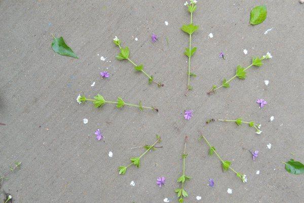 flower mandala from nature