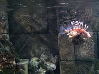 blue reef aquarium hastings