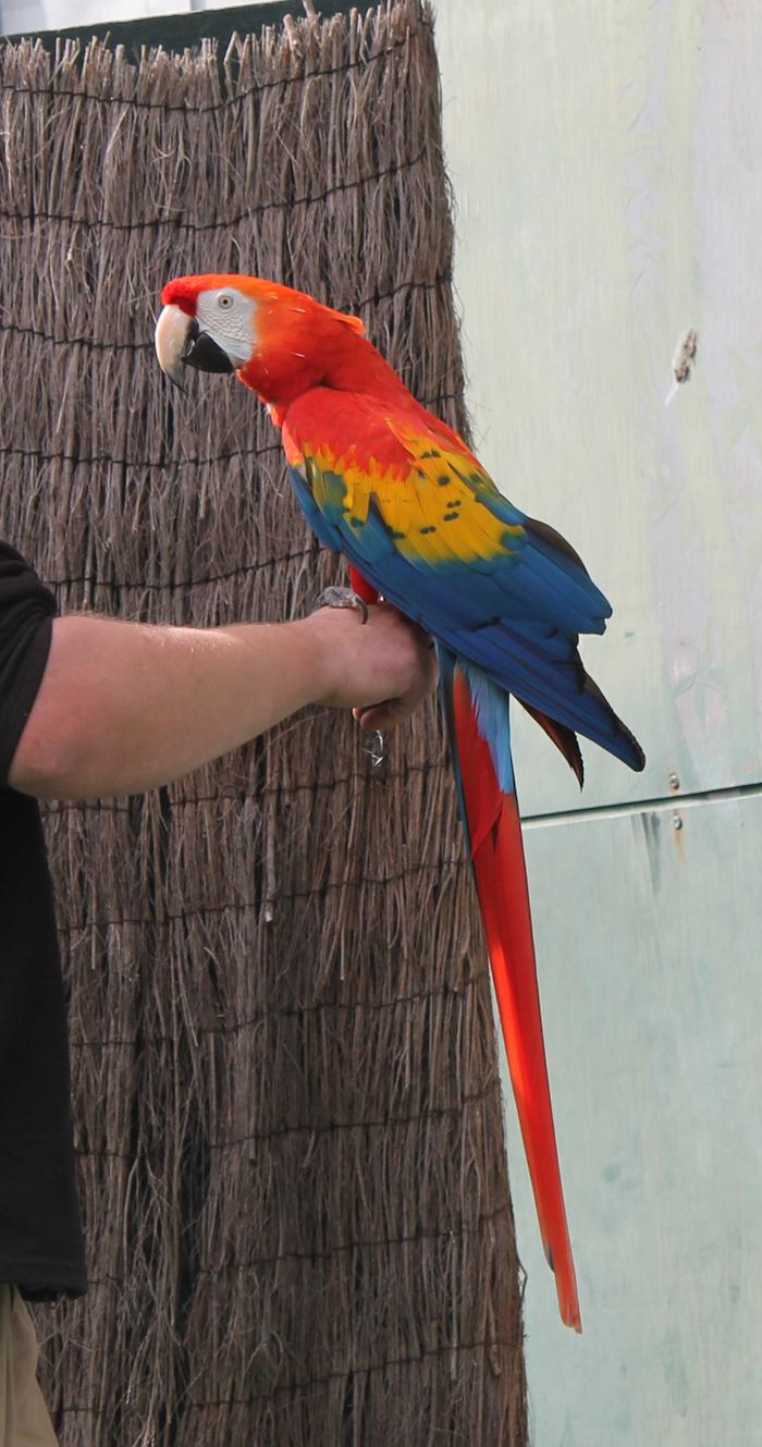 macaw at bristol zoo gardens