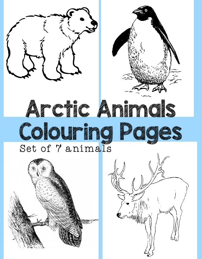 Arctic Animals Colouring pages set of 7 colouring sheets featuring penguin, polar bear, snowy owl, reindeer and more