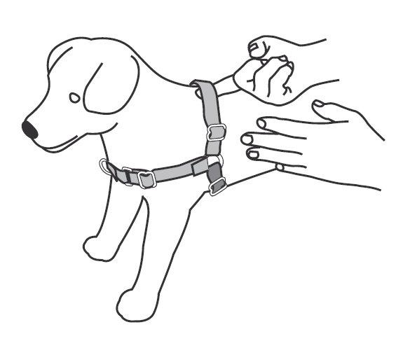 dog harness large