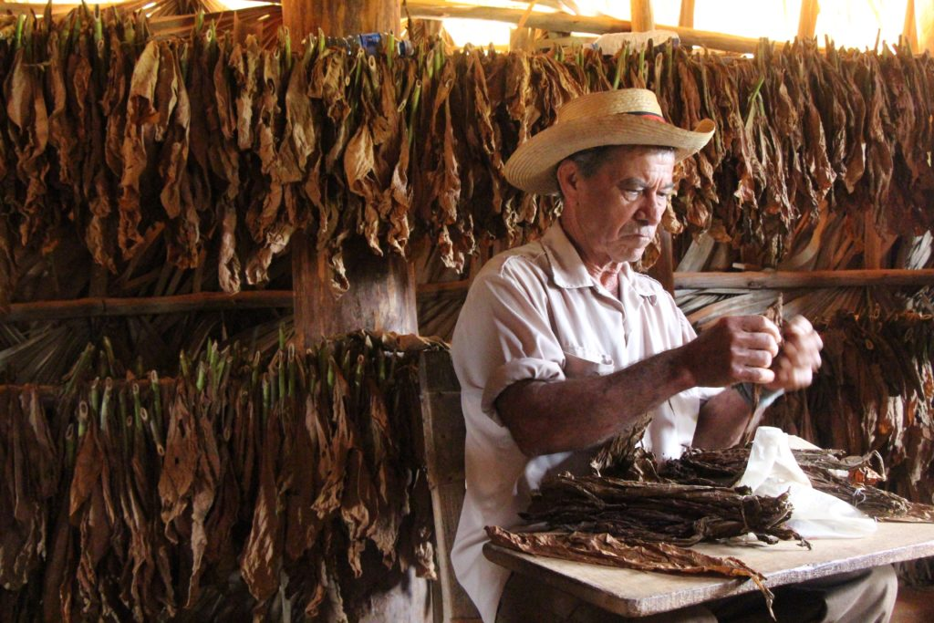 2017 Travel To Cuba What A Tobacco Farmer Taught Me About Cuban Cigars
