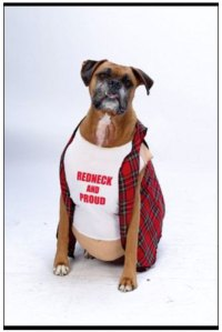 Simply Boxer Dogs: Boxer Dog Halloween Costume-Larry the ...