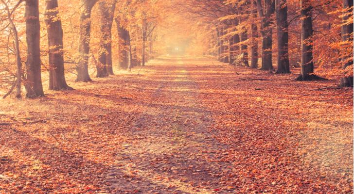Free Fall Season Wallpaper 7 Top Stock Picks For September Investorplace