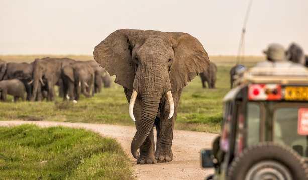 Amboseli-Elephant-1200x700