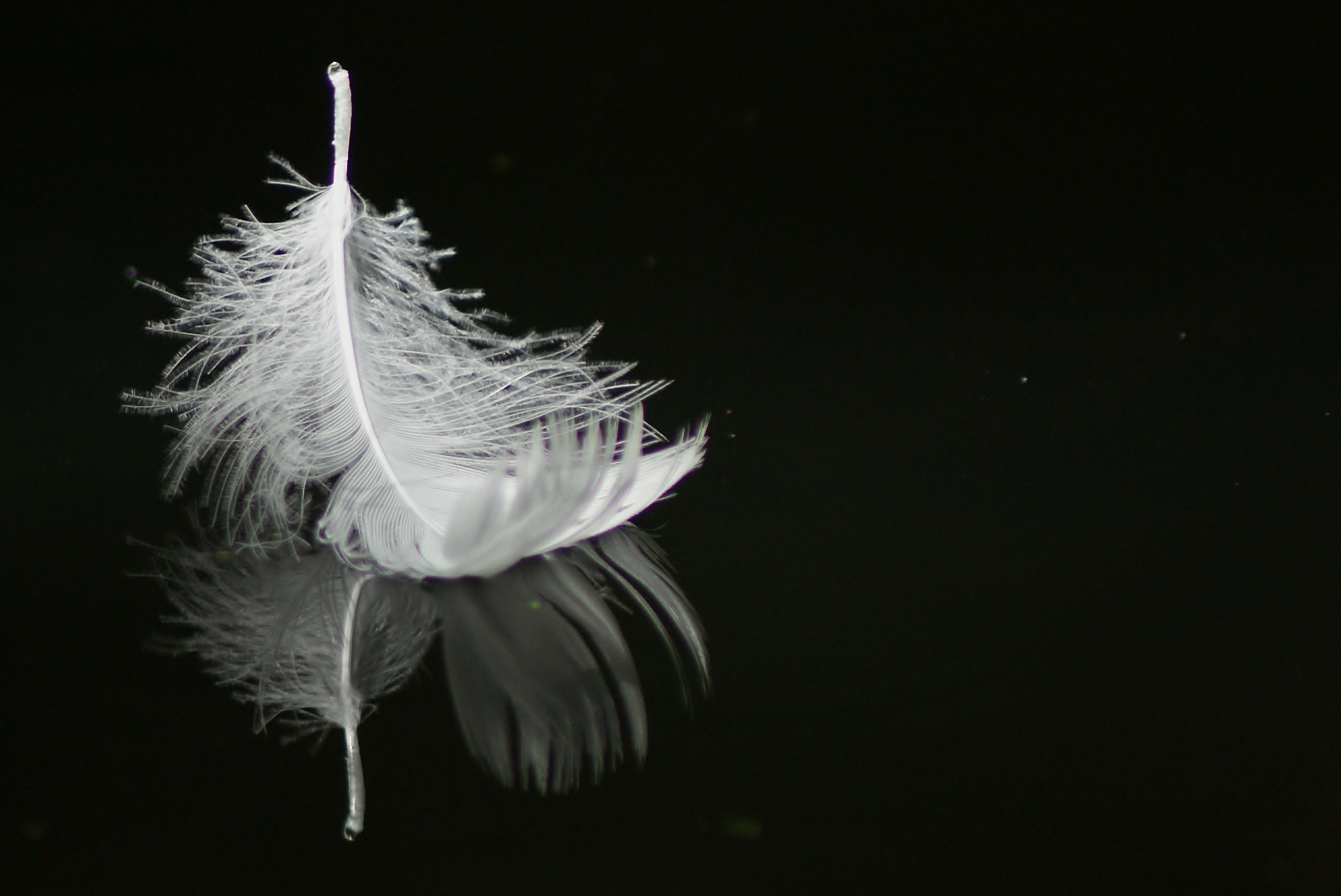Falling Feathers Wallpaper White Invisible World