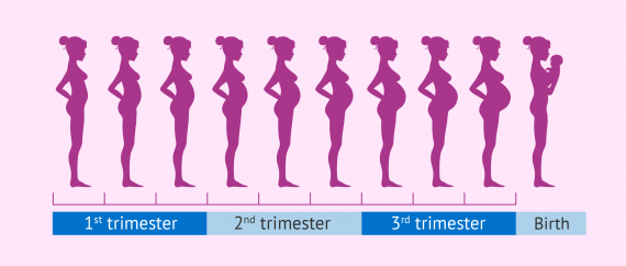 Estoy De 20 Semanas Cuantos Meses Son Pregnancy Stages By Month - Fetal Development With Pictures