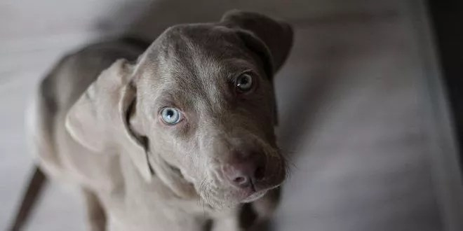 Arriva un nuovo cucciolo di cane da caccia, ecco cosa fare e cosa non fare!