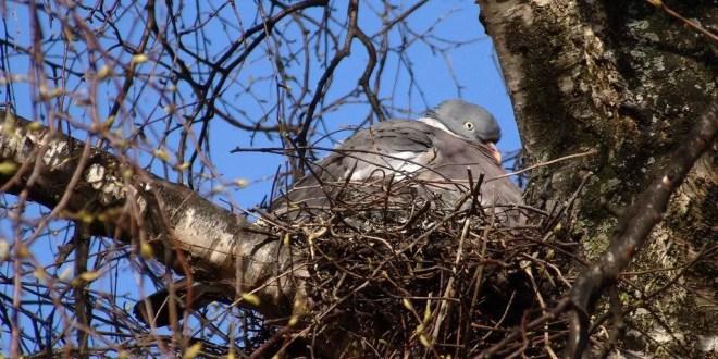 monitoraggio degli uccelli nidificanti in Umbria