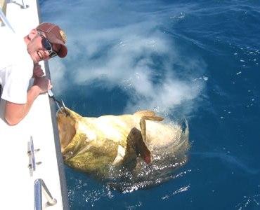 Gulf Florida Fishing