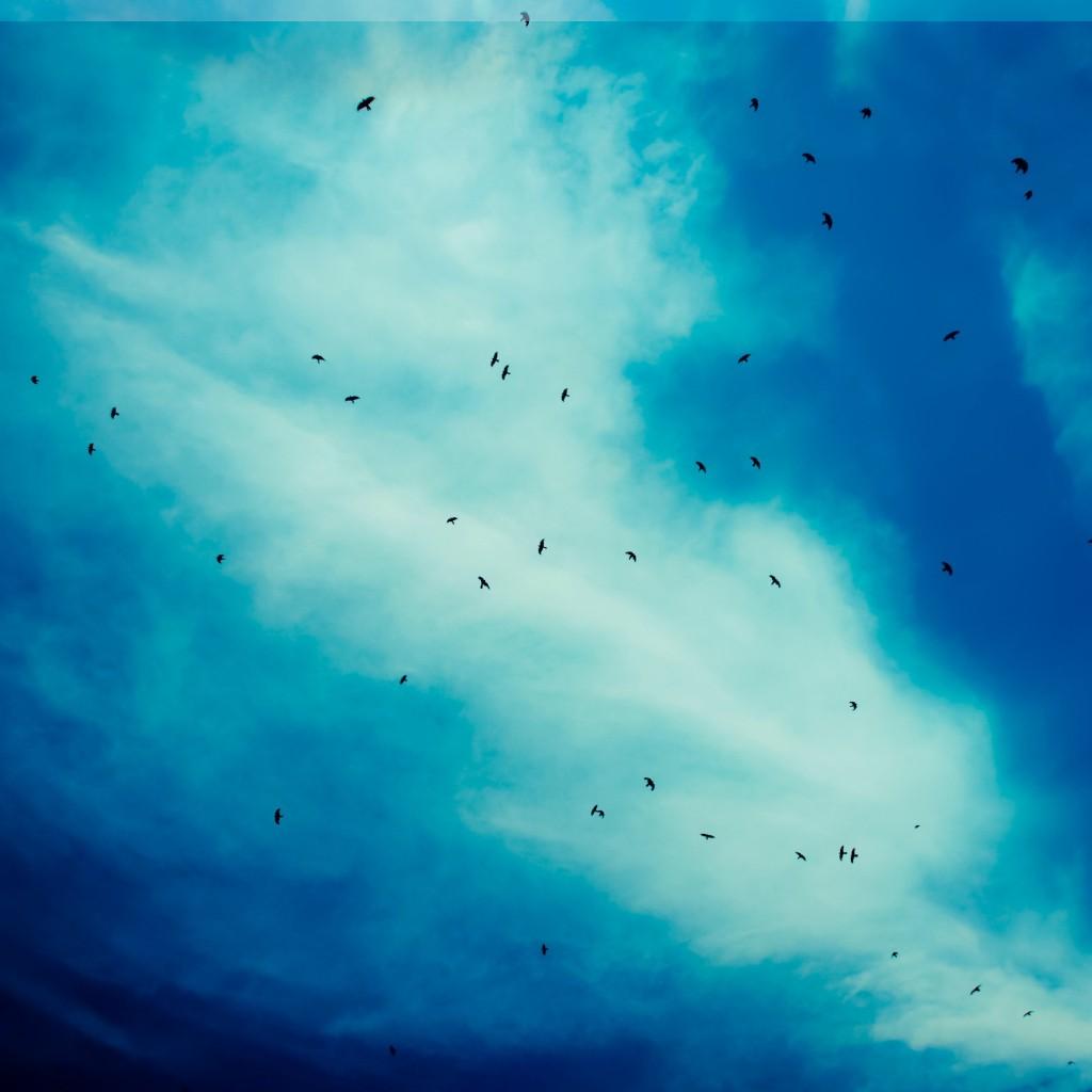 Angry Bird Space Wallpaper 3d Little Bird Ipad Wallpaper Download Free Ipad