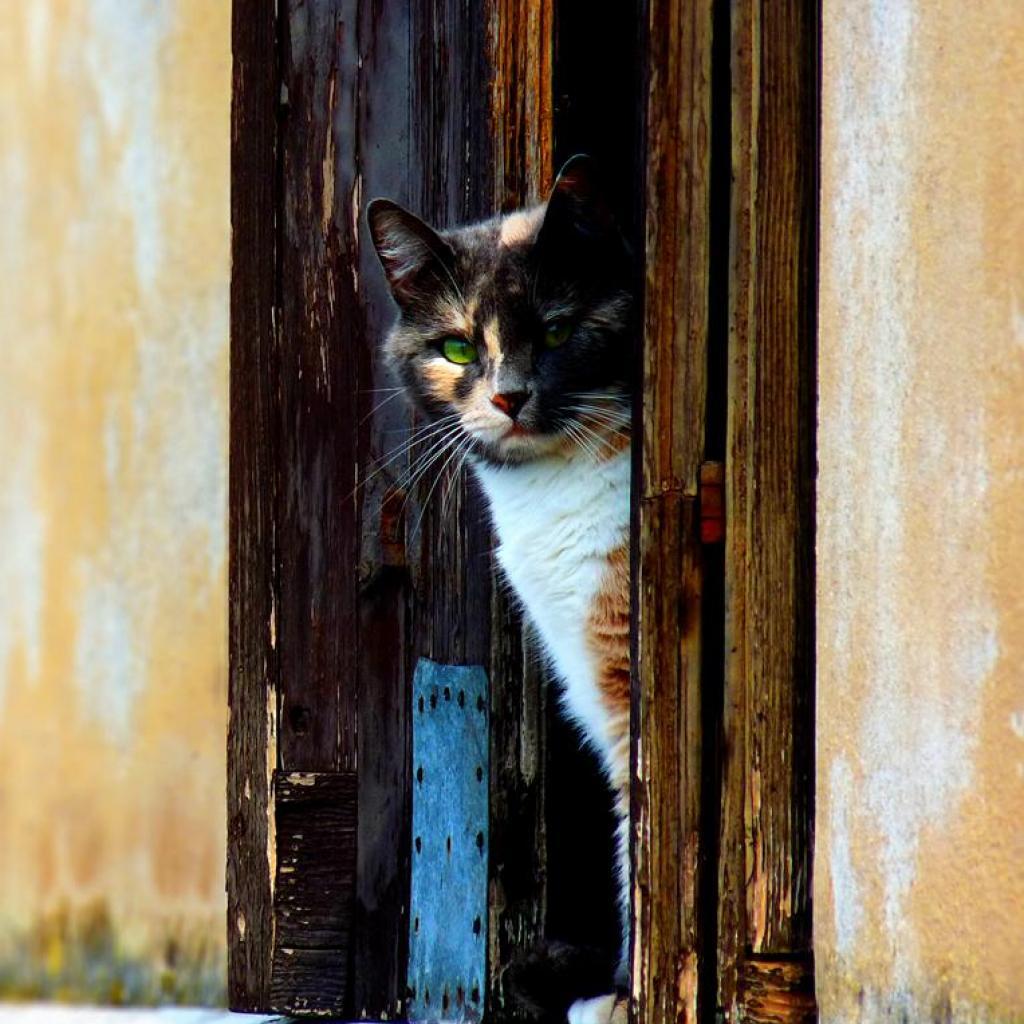 Cute Cat Wallpapers Kitten Sleeping Cat Ipad Wallpaper Download Free Ipad