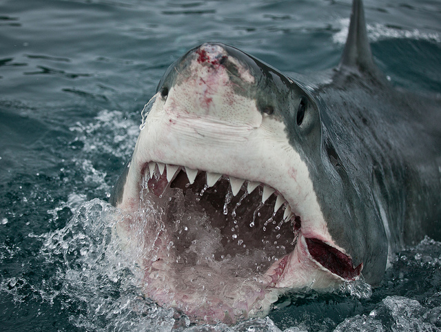 Top Ten Shark Attack Facts Fun Facts You Need To Know