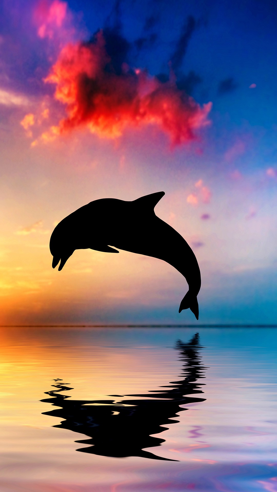 Cute Wallpapers On Computer Dolphin Bounce The Sea Iphone Wallpaper
