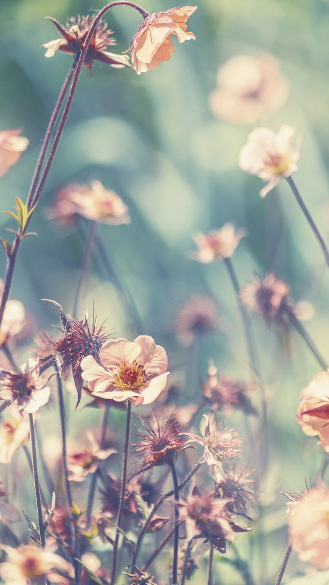 Girly Wallpapers Hd Flowers Hd Wallpapers Iphone Wallpaper