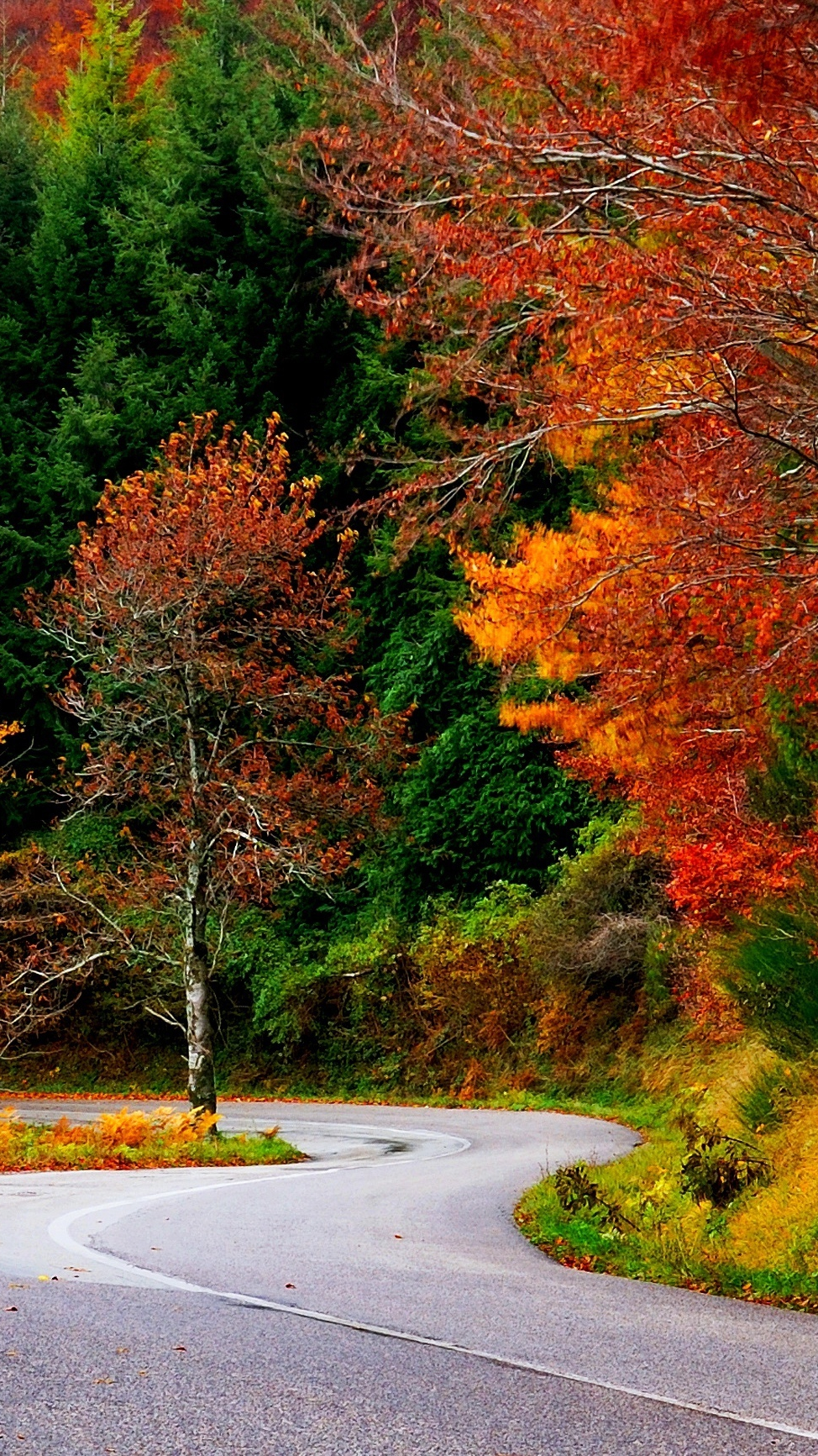Wallpaper For Phones Fall Forest Autumn Fall Road Leaves Trees Colorful Nature