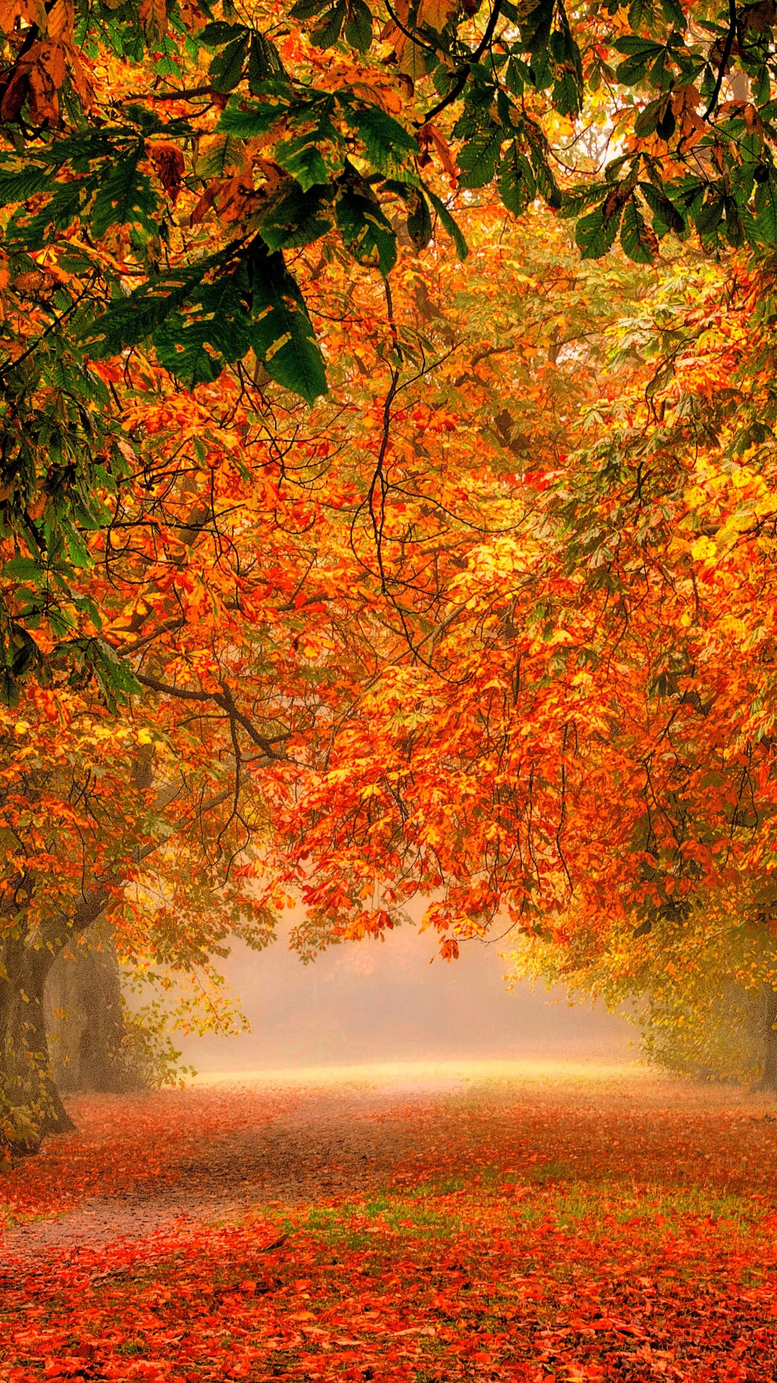 Fall Road Wallpaper Forest Nature Park Colorful Leaves Iphone Wallpaper