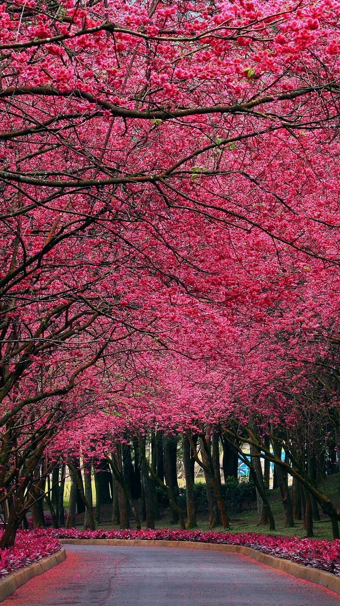 3d Wallpaper Iphone 7 Pink Flowers Autumn Trees Park Iphone Wallpaper Iphone