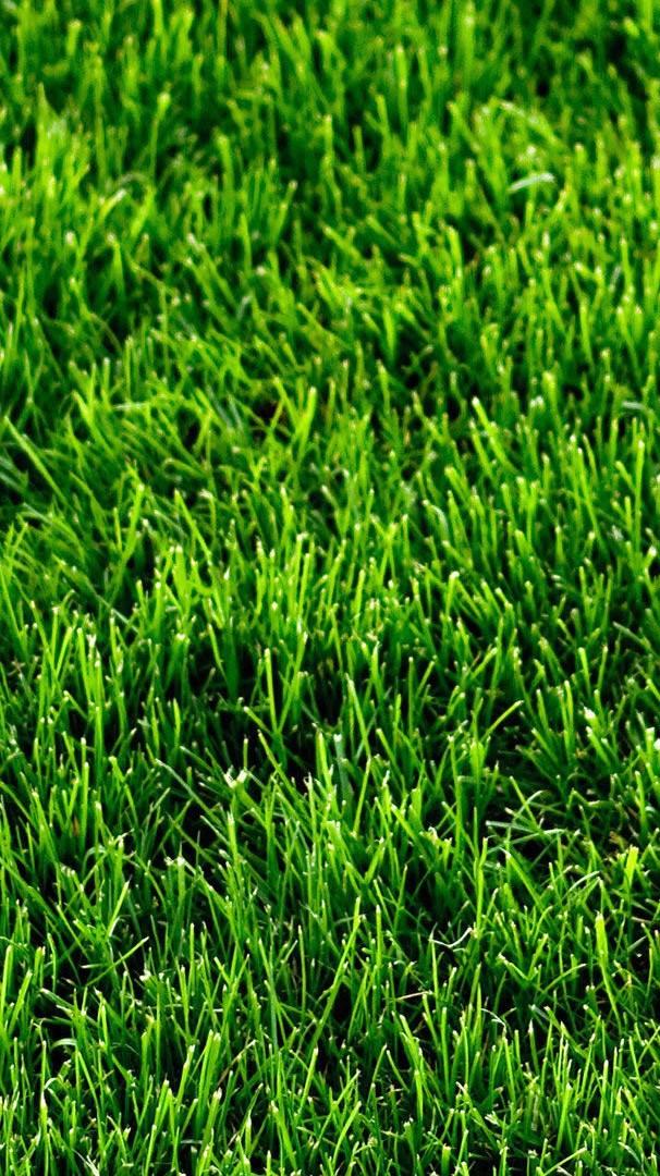 Cute Halloween Phone Wallpaper Green Grass Mosses Iphone Wallpaper Iphoneswallpapers Com
