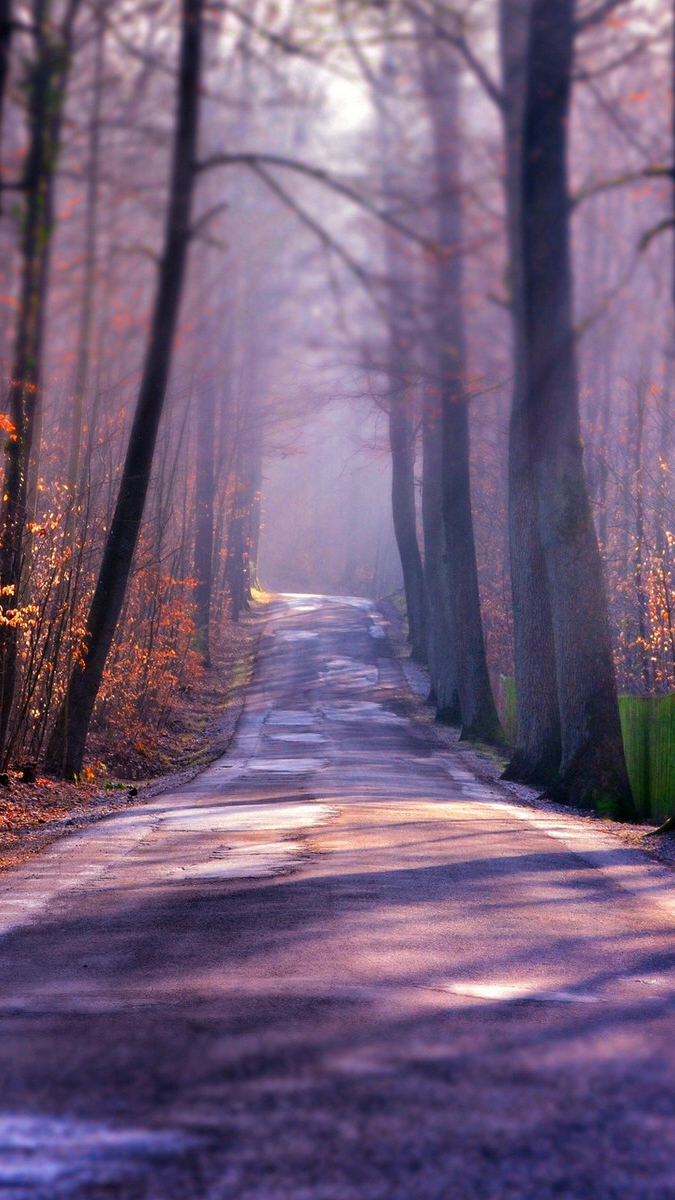 Iphone 7 Wallpaper Size Winter Autumn Road Iphone Wallpaper Iphone Wallpapers