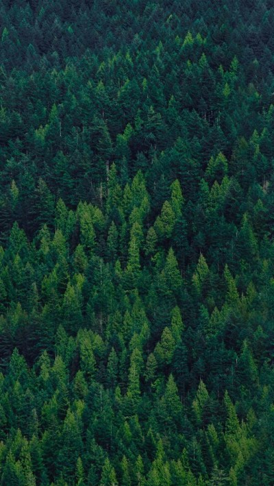 Green-Forest-Trees-iPhone-Wallpaper - iPhone Wallpapers